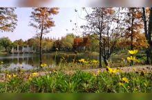 免费小众景点~上海长兴岛郊野公园 上海长兴岛,是崇明三岛中距上海市区最近的一个,仅需半小时车程。穿过
