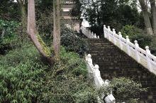 青城山后山,灵宝塔,走走看看去!