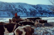最美的风景在路上,在雪山脚下,也在不经意的回眸间。 鹿角湾景区位于新疆沙湾县城西南80公里的天山北坡