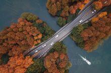 深秋的杨公堤美得不像话,两岸的杉树层林尽染,散落在西湖上,仿若一条黄丝带。 时不时有西湖的小船游经,