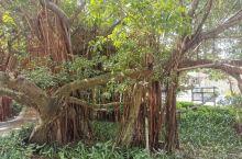 颐和温泉,古树参天,环境优美