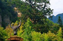 大美神农!这里是大美神农架,这里有关于大自然最完美的展示,这里有对生命和美最细致的诠释……这里的一山