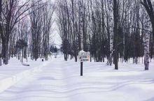 冬天里,整个北海道全部被白雪覆盖。这里的雪可以满足你对冬天所有的幻想~        富良野美瑛以这