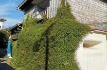 迷路之街:坐公交到土庄町下来,谷歌导航一会儿就到,还路过了妖怪博物馆。当时被侧面满墙的绿色植物吸引,