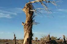 怪树林是内蒙古阿拉善旗的经典景点,这里气氛有点荒凉,戈壁之上有枯毁的树木,规模很大,给人以深深的震撼