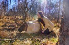 【景点攻略】这中国最后的使鹿部落,驱车十几小时踏寻丛林深处的秘密!与大型驯鹿亲密接触! 详细地址:内