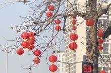 随着春节临近,红火起来。