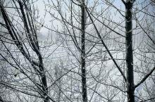齐河第一场雪,好美!!!