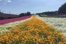 日本富田农场位于北海道富良野地区,是北海道最先驱的花田之一。农场设有九大景观花田、2个花园、1个温室