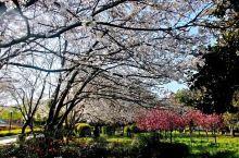 《来自戈阳的诱惑:我真的想要去旅游……》  我是孤独浪子,希望我的拍拍让您有所收获。 漫游神州31载