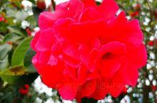 《来自鹤壁的诱惑:我真的想要去旅游……》  我是孤独浪子,希望我的拍拍让您有所收获。 漫游神州31载