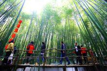 漫步泉水环绕的石板小径上,像在绿雾里穿行,竹林与鲜花相映成趣,在里面穿行,如在画中游。随风摇曳的翠竹