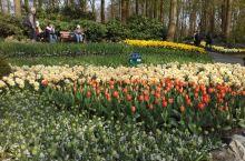 库肯霍夫公园会种下7百万颗不同花种的球茎,其中郁金香就有约1000多种。非常值得去看看 。