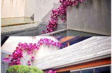 #丽江古城英迪格 主打茶马古道文化的一家酒店 配合高山杜鹃的装饰点缀 整体的设计感非常强 备品和对面