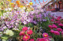 鲜花盛开,欣欣向荣