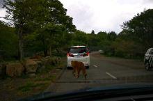 狮王,过马路!