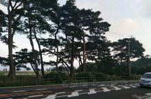 美丽的松岛,五大堂,古寺庙,博物馆,登上游船,里面的小岛更是如入仙境,日本有名三景之一我去过日本松岛