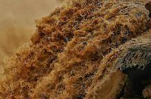 黄河壶口瀑布堪称黄土高坡上的奇現:在平原上流淌的黄河水到了壶口突然下落,落差估计有三四十米,瞬间水气