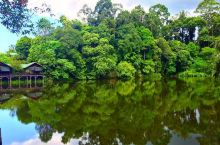 爱鸟者的专属天堂  山打根雨林探索中心真的是真正的热带雨林,是世界上的第二大的物种极其丰富的热带雨林
