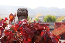 最美的风景都藏在胡同里 红红火火 恍恍惚惚  还没来得及一一走过 秋天也快要过去了......