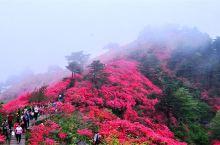 麻城市龟峰山风景区位于麻东的龟山乡境内,距市区25公里,由龟头、龟腰、龟尾等9座山峰组成,方圆100