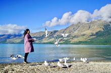 """格林诺奇 ,Glenorchy,""""Gate to Paradise""""。那是一种安静到极致的美…雪山湖"""