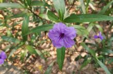 紫金公园的花