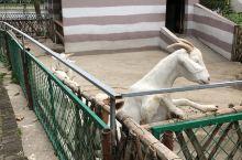 太阳岛度假村的农场,玩的不亦乐乎,小动物们实在太可爱啦!