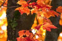 加拿大|蒙特朗布朗的秋  这里春可赏花,夏可玩水,秋可赏枫,冬可滑雪,是你不可错过的美景之一……