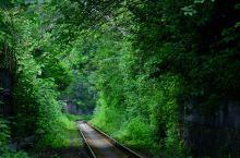 攀枝花·绿色隧道