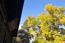 西山大觉寺 又要到一年赏银杏的时节了 古刹、银杏,再来杯清茶... 无需多言