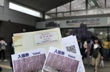 奔着紫藤去的足利 遇上五一日本也是假期 人人人人 花确实很多很密集 园区不算大  除了紫藤 其他花也