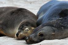 海豹湾聚集的不是海豹,是海狮。大部分都懒懒的打着瞌睡