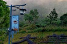 白雾蒸腾的山色非常好看。新兴的象窝山海拔800多米,四周群山环绕,草木葱茏,茶田遍布,早上常会有雾,