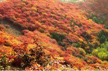 2019.10,北京顺义,舞彩浅山郊野公园。