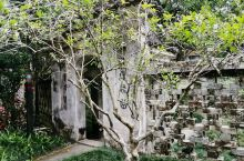 """进了玉林陆川的谢鲁山庄""""迎屐""""门后,院子的东面是一道""""十""""字式花窗,旁边有个门叫""""又一"""",门前有棵米"""
