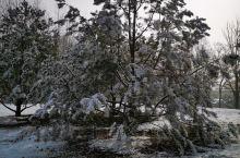 """京城初雪如约而至,为还没褪尽秋色的公园盖上了雪白晶莹的""""棉被""""。"""