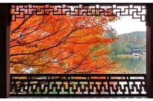 杭州一片红枫