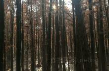 临安青山湖,青山如黛,湖水如镜。