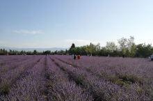 新疆解忧公主薰衣草庄园,紫色的的薰衣花海十分好看,空气弥漫着淡淡的薰衣草香。庄园的衍生产品做的很好,