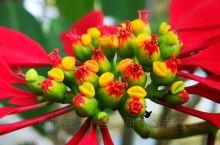 花儿红,花儿艳,有花儿常相伴!