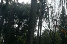 云南勐巴娜西珍奇园,是德宏市的重要景点,里面不是太大,慢慢悠悠转上2个小时,好多动物都是散养的,植物