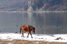 云南香格里拉的纳帕海就在开车进入香格里拉的路上,冬天大雪过后呈现出梦幻般的色彩和韵味,不管是马、牛还