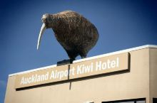 超大kiwi.新西兰.2020