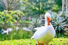 住遍全世界| 锡吉里耶村酒店(Sigiriya Village)   值得入住的酒店之一。  【酒店