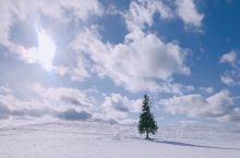 是的,北海道就该冬季来才能体验到寒冬的震撼。  因为北海道的美瑛在白雪和蓝天的映衬下特别宁静空旷却让