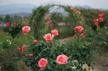 太湖县城西乡幸福村幸福畈,105国道旁,花的海洋,美不胜收!