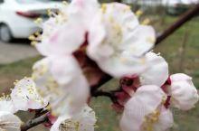 《来自岑溪的诱惑:小区里的樱花盛开了……》  我是孤独浪子,希望我的拍拍让您有所收获。 漫游神州31