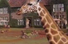 非洲秘境分享#每日一更#长颈鹿庄园  长颈鹿庄园Giraffe manor  提前2年预订,仅8间房