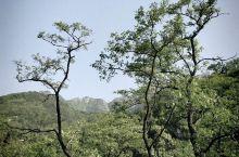 泰山的树,山花,正是槐花,海棠花开正艳的时候,满眼葱绿,行走的云,能让你静静得看一天,石刻众多,石头
